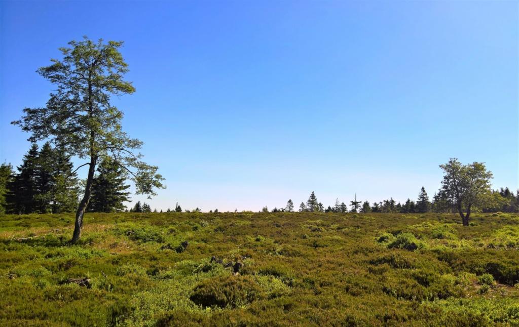 Geschütztes Hochmoor auf dem Beerbergplateau