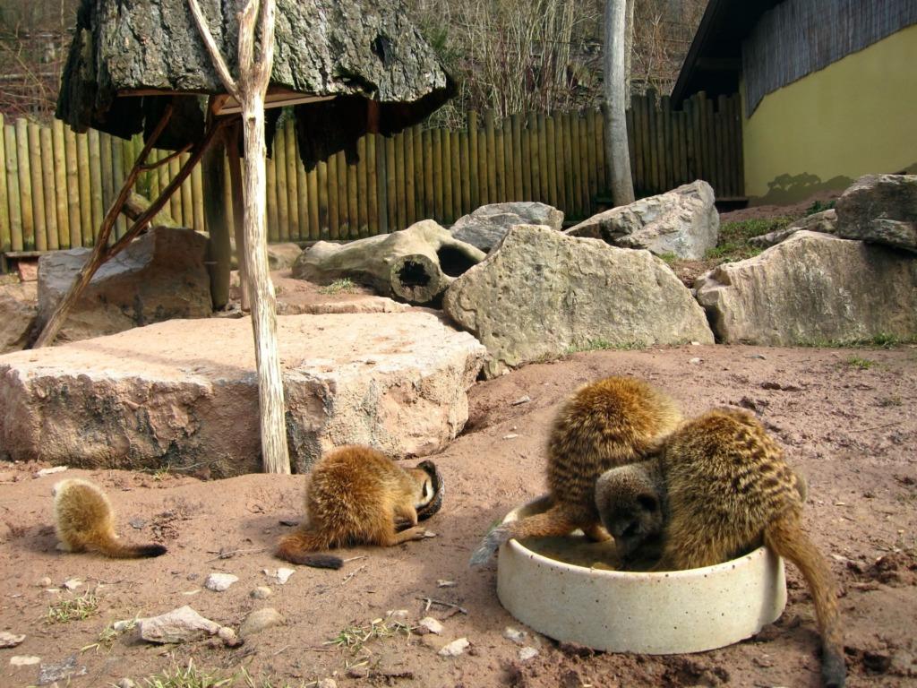 Suhler Tierpark